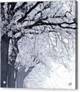 Winter In Our Street Acrylic Print