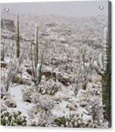 Winter In The Desert Acrylic Print by Sandra Bronstein