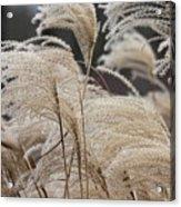 Winter In The Garden #1 Acrylic Print