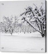 Winter In The Orchard Acrylic Print