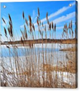 Winter In The Salt Marsh Acrylic Print by Catherine Reusch Daley