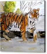 Winter In The Zoo Acrylic Print