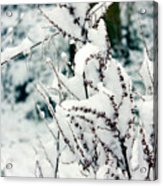 Winter Is Comming  Acrylic Print