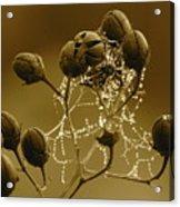 Winter Jewels Acrylic Print