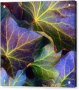 Winter Leaves Acrylic Print