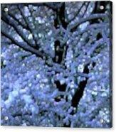Winter Light Acrylic Print