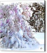 Winter Lilac Acrylic Print