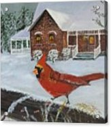 Winter Male Cardinal Acrylic Print