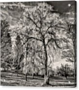 Winter Marches On Polaroid Acrylic Print