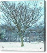 Winter Mimosa Painterly Acrylic Print