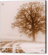 Winter Mist Acrylic Print