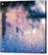 Winter Morning Light Acrylic Print