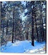 Winter Morning Acrylic Print