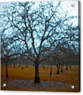 Winter Orchard Acrylic Print by Derek Selander