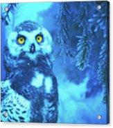 Winter Owl Acrylic Print