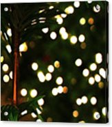 Winter Palm Acrylic Print