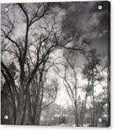 Winter Pathways Acrylic Print