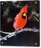 Winter Perch Acrylic Print
