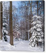 Winter Perfection Acrylic Print
