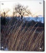 Winter Prairie Grass At Dusk Acrylic Print