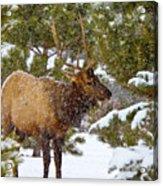 Winter Quest Acrylic Print