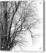Winter Red And White  Acrylic Print