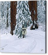 Winter Road Into Sequoia National Park Acrylic Print