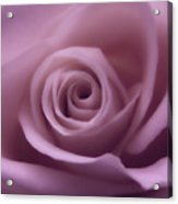 Winter Rose 7 Acrylic Print