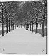 Winter Rows Acrylic Print