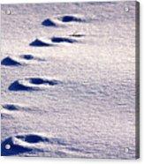 Winter Sand Acrylic Print