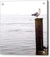 Winter Seagull On Long Beach Island Acrylic Print