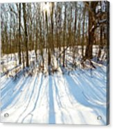 Winter Shadows Acrylic Print by Tim Fitzwater