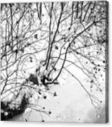 Winter Shrubs, New Hampshire Acrylic Print
