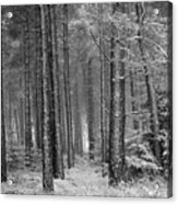 Winter, Slaley Woods Acrylic Print