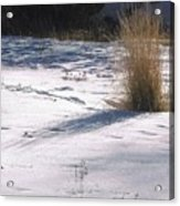 Winter Sparkle Acrylic Print