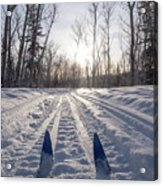 Winter Sport X-country Skis In Sunny Forest Tracks Acrylic Print