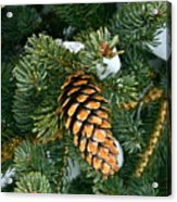 Winter Spruce Acrylic Print