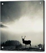 Winter Stag Acrylic Print