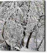 Winter Storm Skylar Acrylic Print