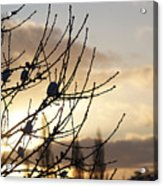 Winter Sun 3 Acrylic Print