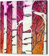 Winter Sunset Birch Acrylic Print