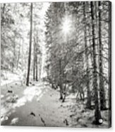 Winter Sunshine Forest Shades Of Gray Acrylic Print