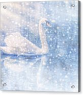 Winter Swan Acrylic Print