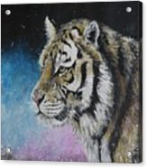 Winter Tiger Acrylic Print