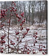Winter Time Frozen Fruit Acrylic Print