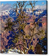Winter Touch Acrylic Print