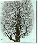 Winter Tree 2009 Acrylic Print