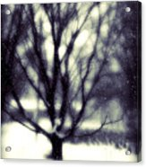 Winter Tree 3 Acrylic Print by Perry Webster