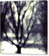 Winter Tree 3 Acrylic Print