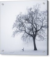 Winter Tree And Bench In Fog Acrylic Print
